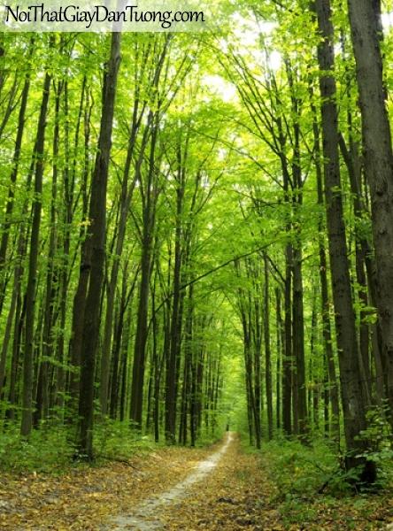 Tranh dán tường, cây xanh mùa xuân DA0279