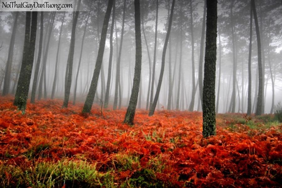 Tranh dán tường, hàng cây và cỏ màu sắc DA0266