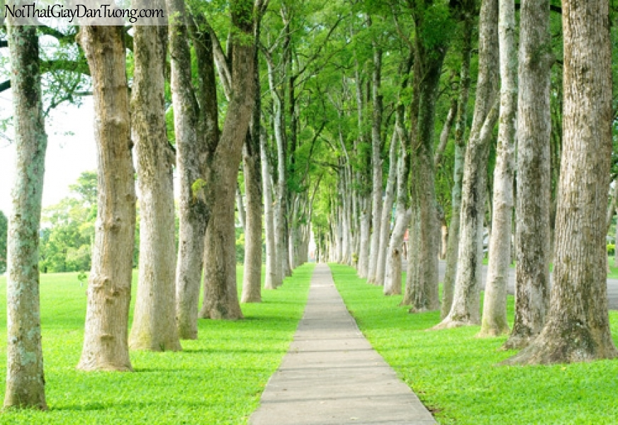 Tranh dán tường, những hàng cây và con đường DA0259