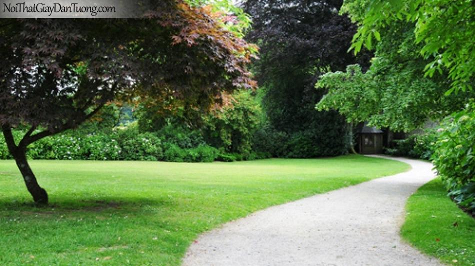 Tranh dán tường, con đường nằm giữa thảm cỏ với hàng cây xanh dẫn lối vào nhà DA0322