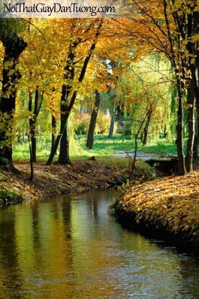 Tranh dán tường, con suối chảy giữa rừng cây cổ thụ mùa thu DA0291