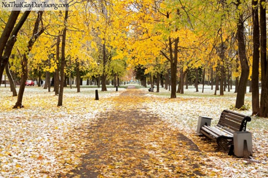 Tranh dán tường, mùa thu là vàng rời DA0282