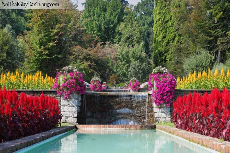 Tranh dán tường, những bông hoa nhiều màu sắc nằm bên bể bơi nhân tạo DA0296