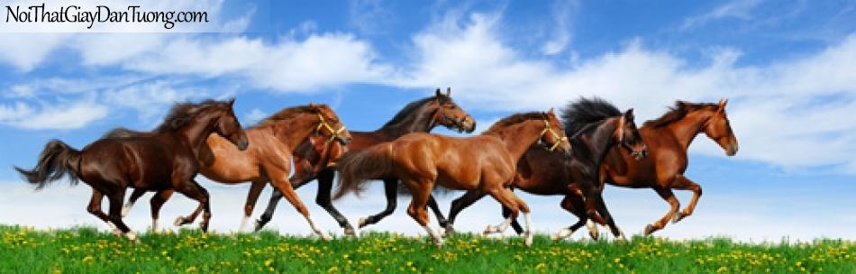 Tranh dán tường, những chú ngựa chạy trên thảo nguyên đầy cỏ DA0312