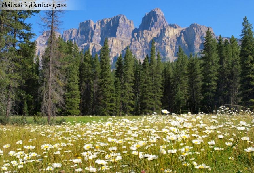 Tranh dán tường, rừng thông nằm bên cánh đồng hoa dưới thung lũng DA0328