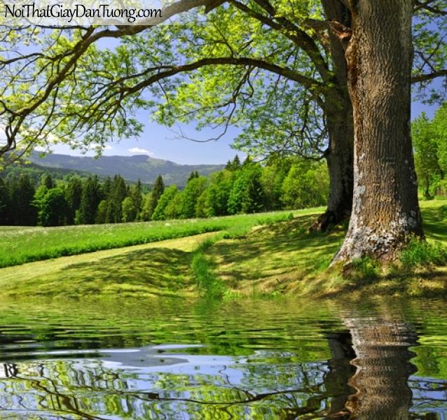 Tranh dán tường, phong cảnh núi rừng với 2 cây cổ thụ lớn DA0339