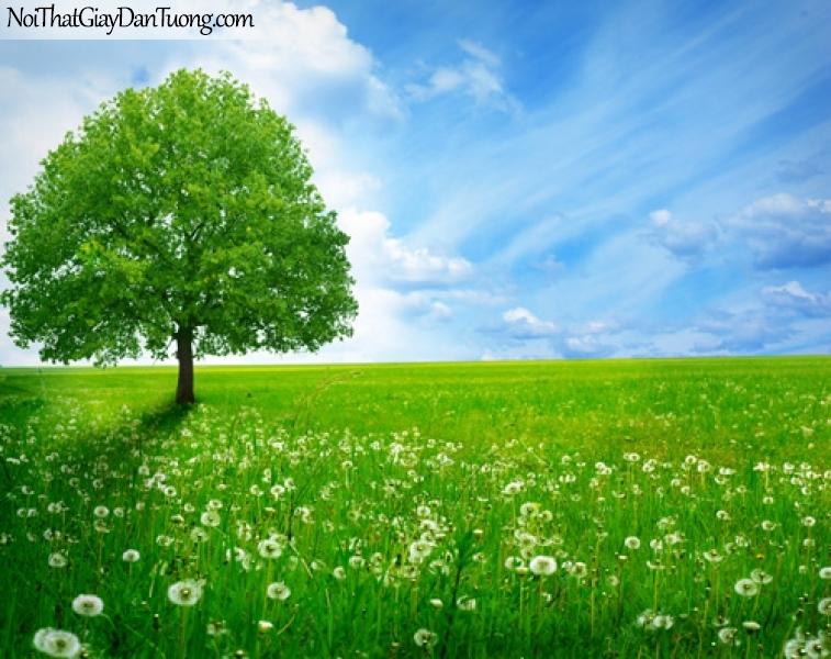 Tranh dán tường, bầu trời xanh và cây cỏ hoa DA0360