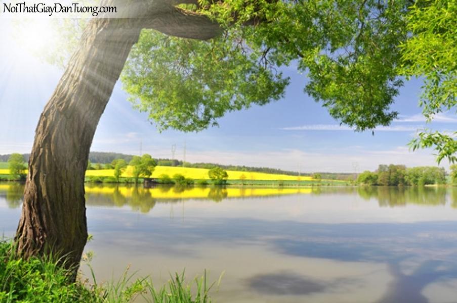 Tranh dán tường, cây vượt ra hồ nước DA0362