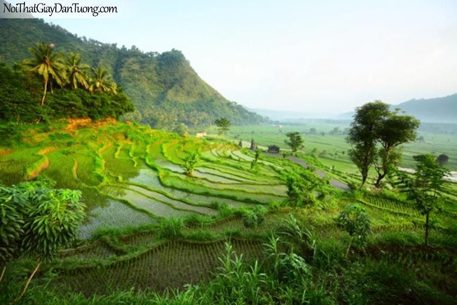 Tranh dán tường, cánh đồng lúa bâc thang hung vĩ DA0383