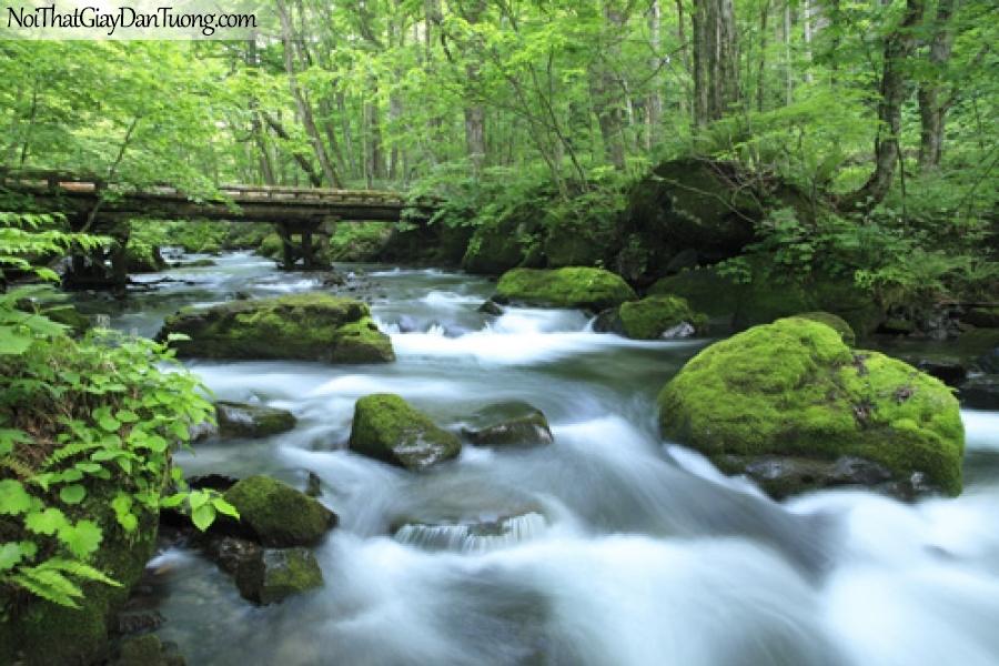 Tranh dán tường, cây cầu bắc qua thác nước thơ mộng chảy trong rừng xanh DA3065
