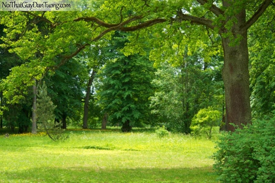 Tranh dán tường, cỏ cây xanh biếc DA0377