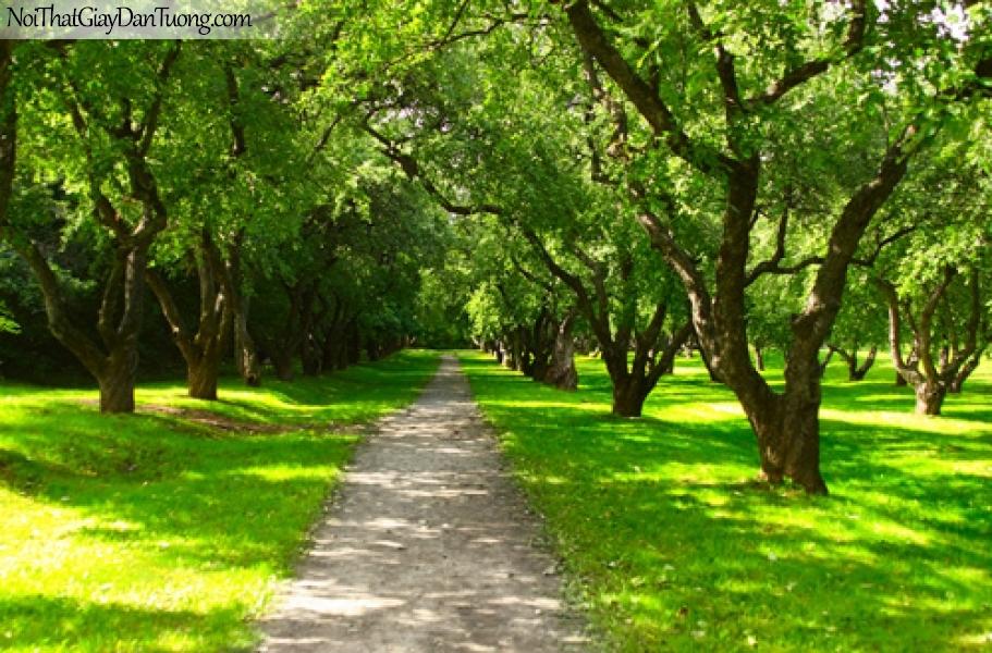 Tranh dán tường, con đường trong công viên cây xanh DA0380