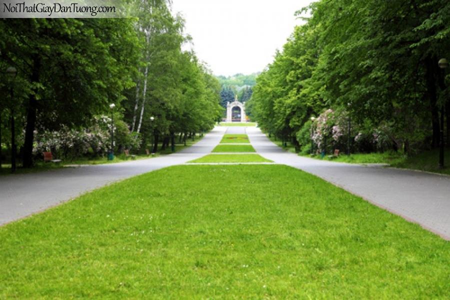 Tranh dán tường, hàng cây xanh và con đường DA0370