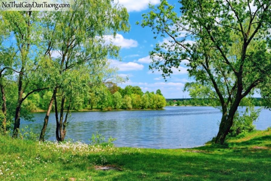 Tranh dán tường, hàng xanh và hồ nước xanh biếc DA0371