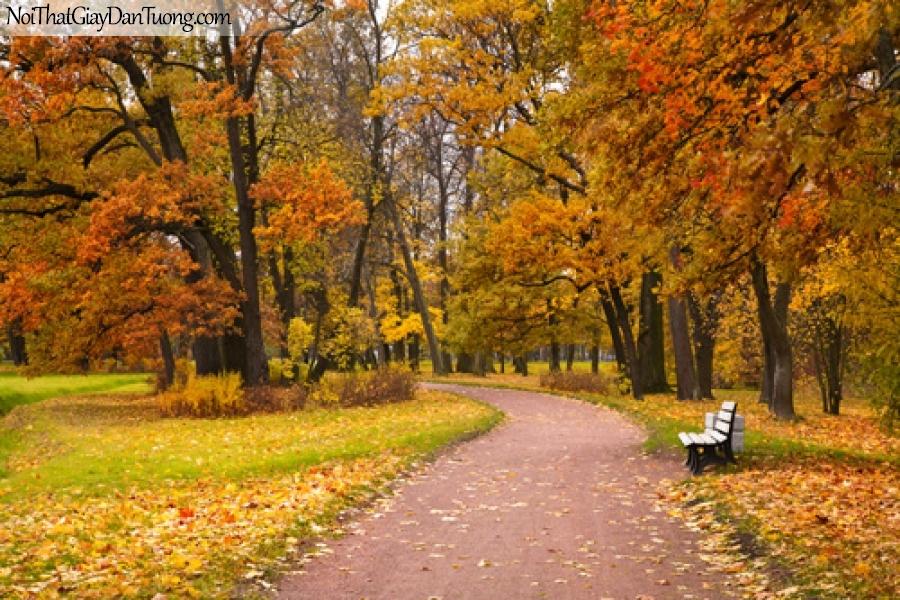 Tranh dán tường, mùa thu là rời trên con đường DA0388