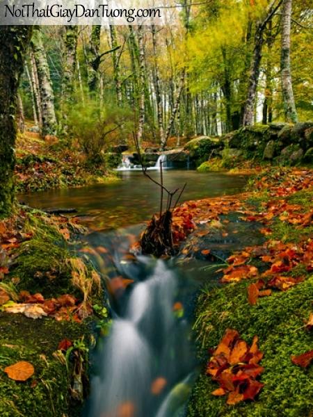 Tranh dán tường, thác nước chảy êm đềm giữa khu rừng mùa thu DA3070