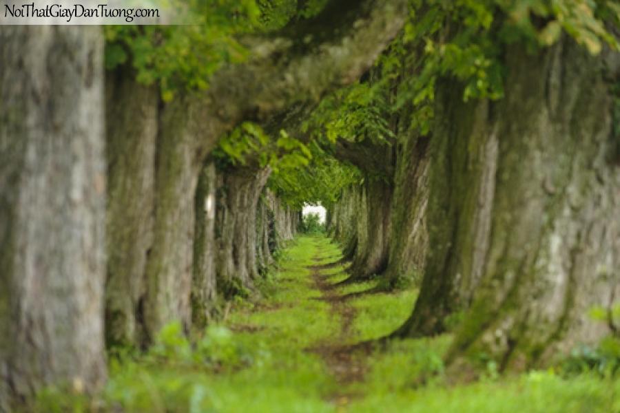 Tranh dán tường, hàng cây cổ thụ DA0413