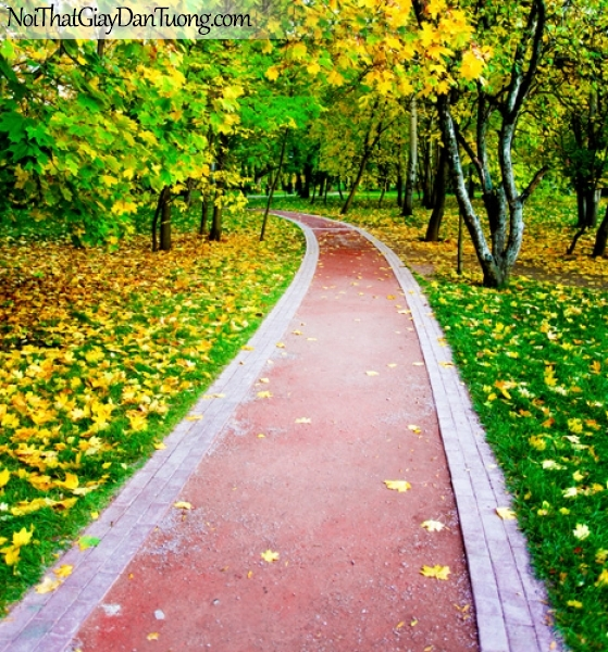 Tranh dán tường, mùa thu là vàng rời trên con đường nhỏ DA0415