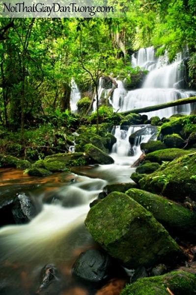 Tranh dán tường, vẻ đẹp mê hồn của thác nước giữa rừng xanh với những mỏm đá đầy rêu xanh DA3101