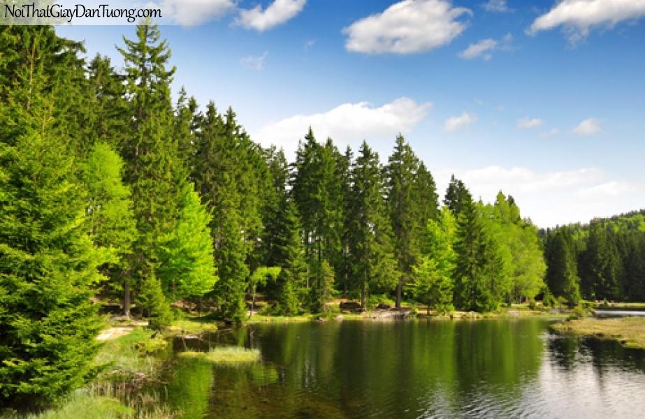 Tranh dán tường, hồ nước và hàng cây xanh DA0492