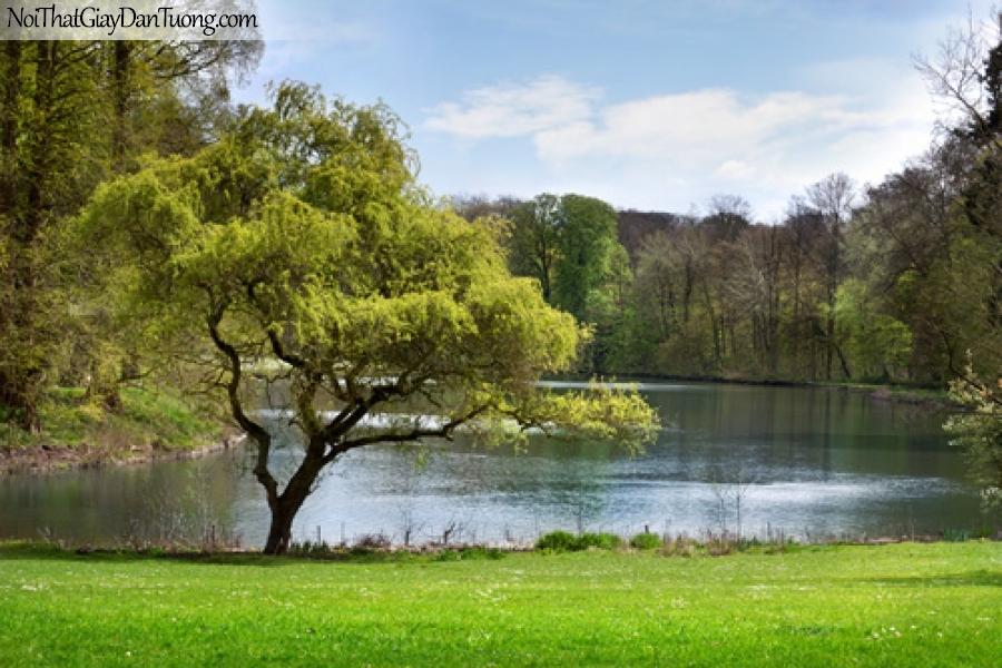 Tranh dán tường, hồ nước yên lặng và hàng cây DA0489