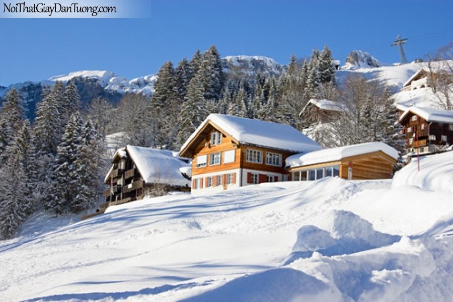 Tranh dán tường, cây thông và những ngôi nhà phủ đầy tuyết trắng DA0506