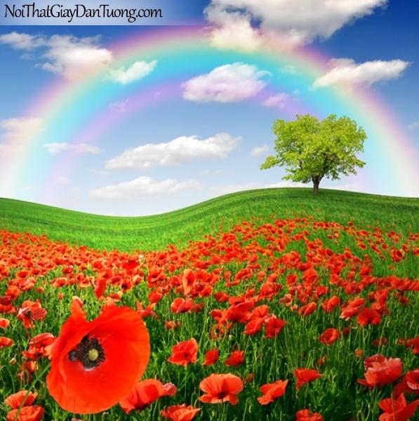 Tranh dán tường, bầu trơi, cầu vồng, cánh đồng hoa DA0514