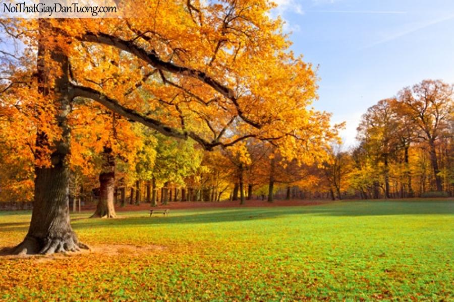 Tranh dán tường, cây cổ thụ và lá vàng mua thu DA0521