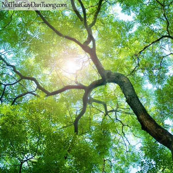 Tranh dán tường, cây xanh và những tai nắng DA0510