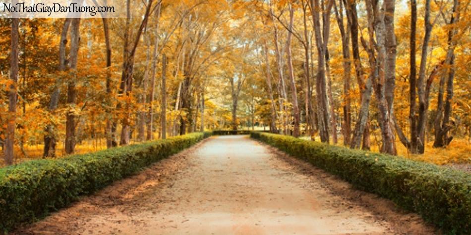 Tranh dán tường, con đường hàng cây đấy lá vàng DA0523