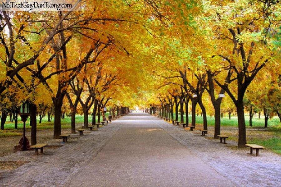 Tranh dán tường, con đường, hàng cây là vàng mua thu DA0517