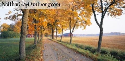 Tranh dán từơng, con đường hàng cây và nông trại DA0511