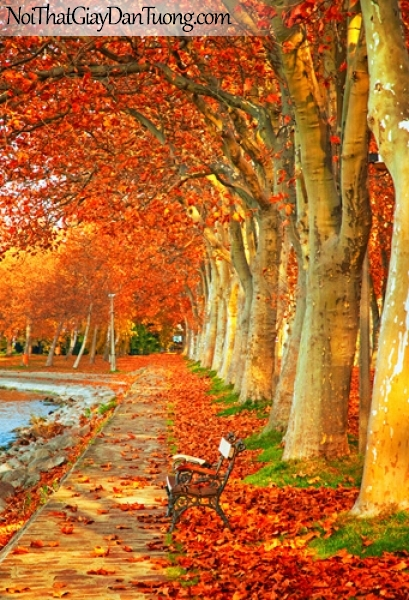 Tranh dán tường, bờ hồ hàng cây lá vàng rơi DA0529