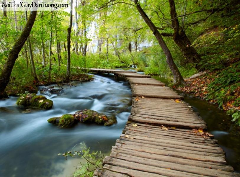 Tranh dán tường, con đường gỗ và rừng sâu DA0530
