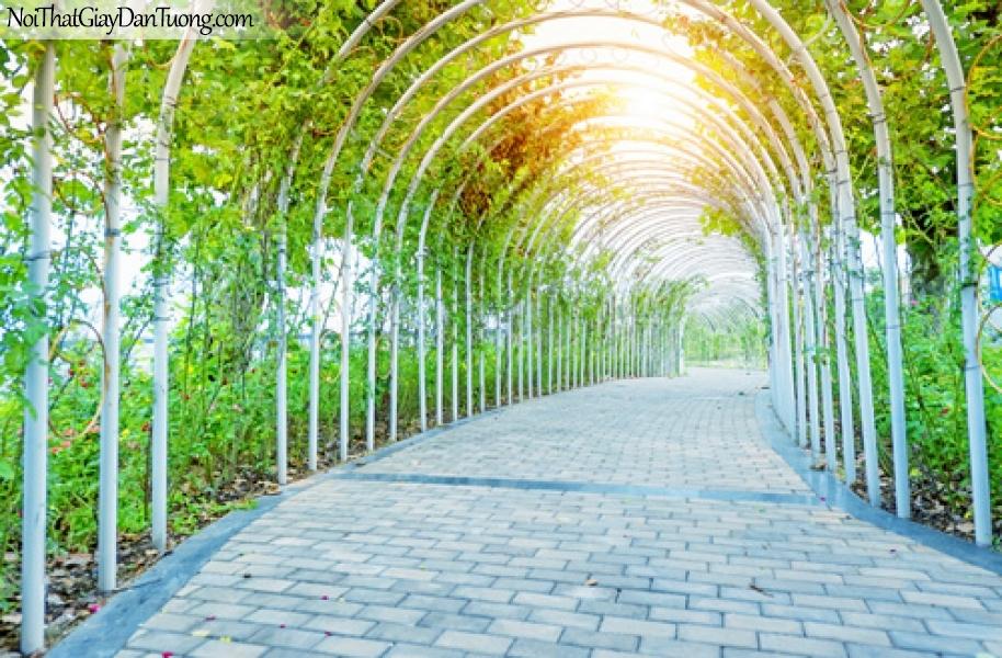 Tranh dán tường, con đường mòn trong vườn và những tai nắng DA0533