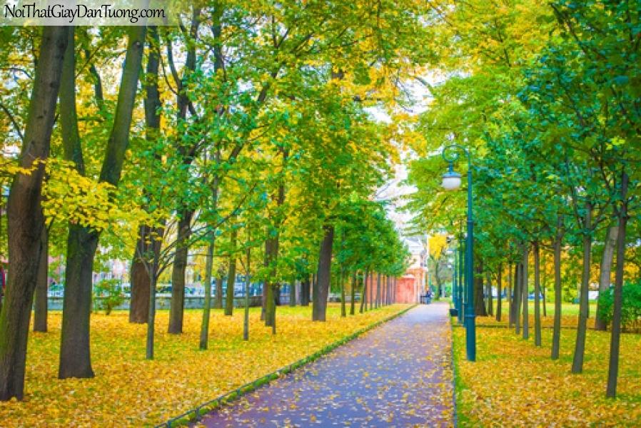 Tranh dán tường, công viên, con đường, lá vàng rơi DA0527