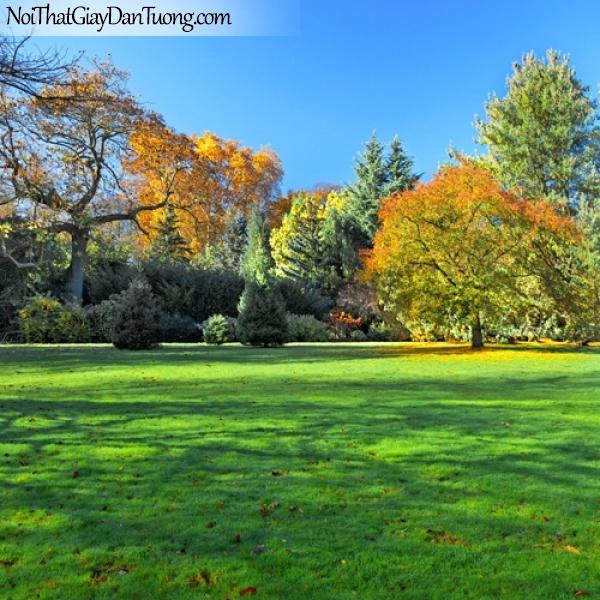 Tranh dán tường, vườn cây thảm cỏ xanh DA0524