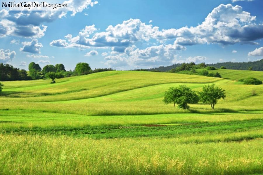 Tranh dán tường, cánh đồng xanh trên đồi xanh DA0540