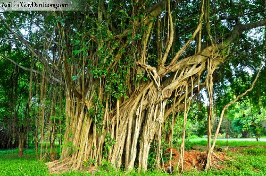 Tranh dán tường, cây cổ thụ trong rừng xanh DA0554