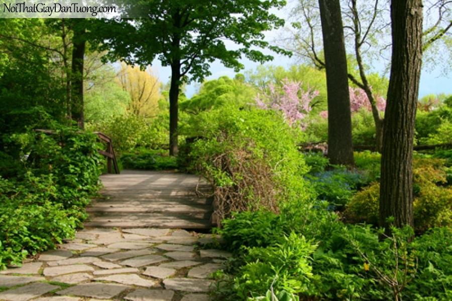 Tranh dán tường, hàng cây xanh và con đường nhỏ DA0550