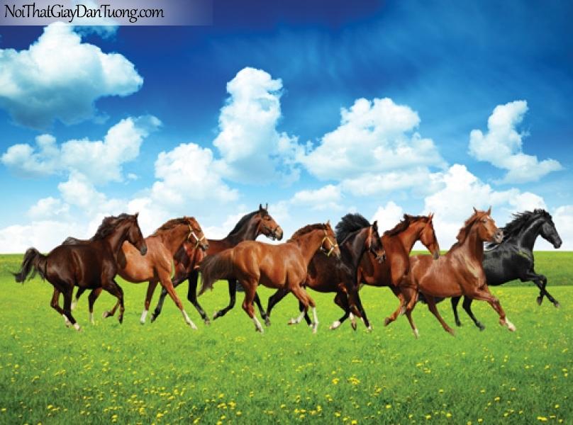 Tranh dán tường khổ lớn | tranh bát mã | những chú ngựa trên đồi thảo nguyên xanh DA0539