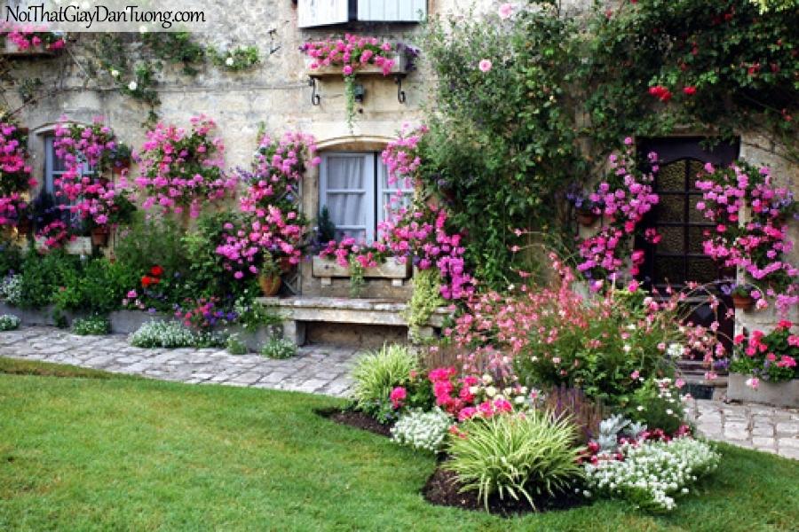 Tranh dán tường, những hàng hoa trên bực tường DA0547