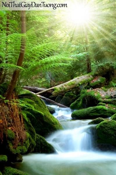 Tranh dán tường, vẻ đẹp mê hồn của thác nước chảy giữa rừng cây xanh DA3137