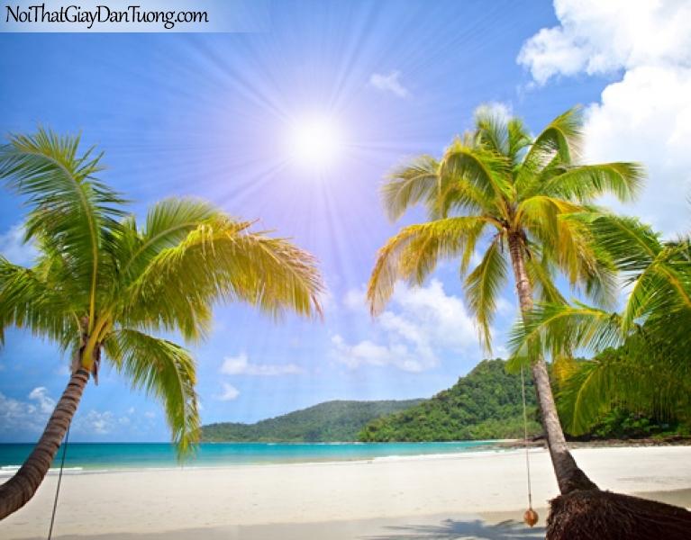 Tranh dán tường, ngắm bãi biển xanh và hàng cây dừa xanh DA1150