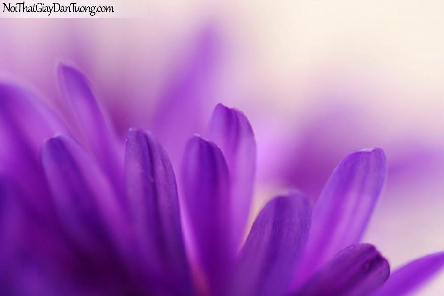 Tranh dán tường , bồng hoa màu tím tím DA2066