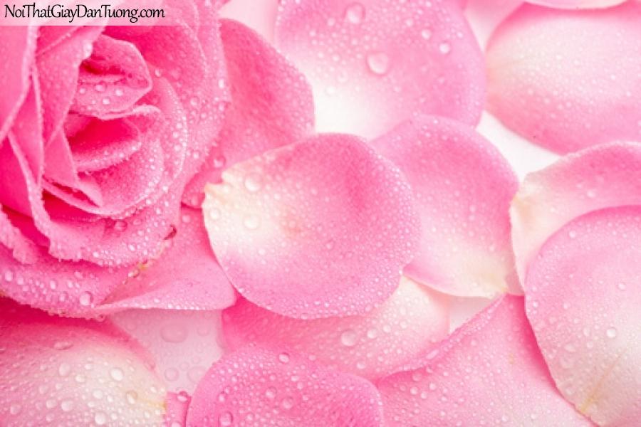 Tranh dán tường , bồng hồng xinh xắn DA2065