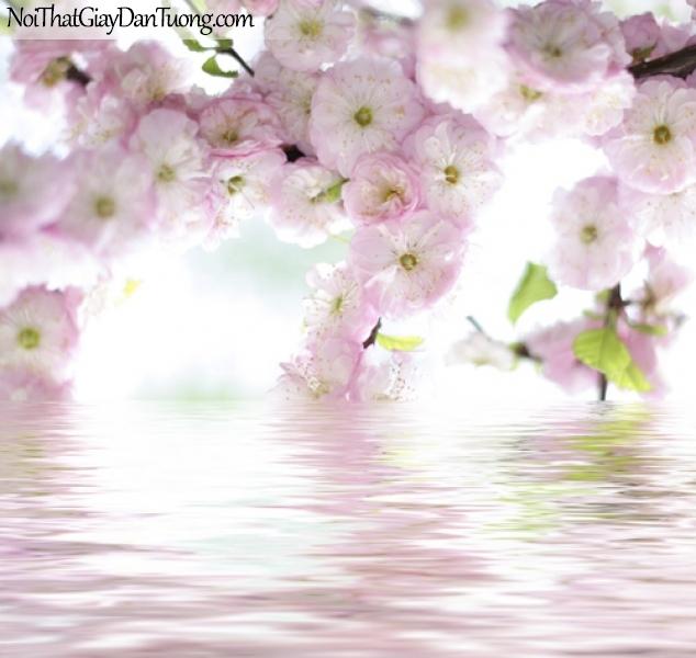 Tranh dán tường , cánh hoa màu hồng nhạt và hồ nước DA2069