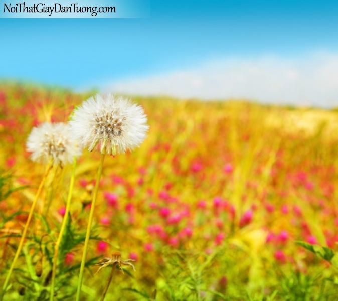 Tranh dán tường , những bồng hoa màu tím và màu trắng DA2045