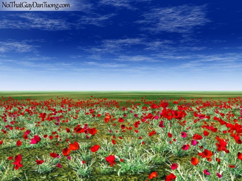 Tranh dán tường , những hàng hoa màu đỏ tươi đẹp DA2076