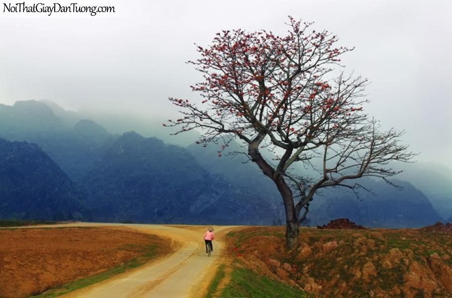 Tranh dán tường , cảnh quê người mẹ đạp xe đi làm những ngọn núi hùng vĩ DA0569